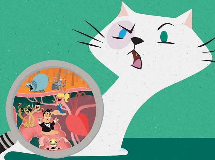 Parasitter hos katter: flått og lopper | zooplus magasin